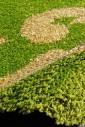 Loca 9161 green