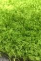 Puffy 4b S001A green овал